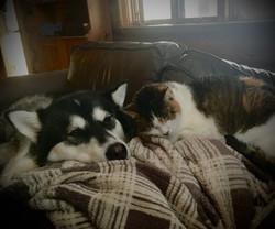 2021-03-30 Kona loves her kitty