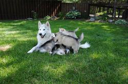 Onishkaa and Cruz'er pups