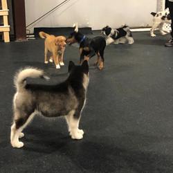 May 2020, puppy social at RB