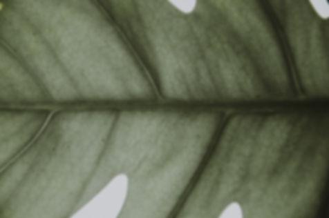 annie-spratt-527629-unsplash.jpg