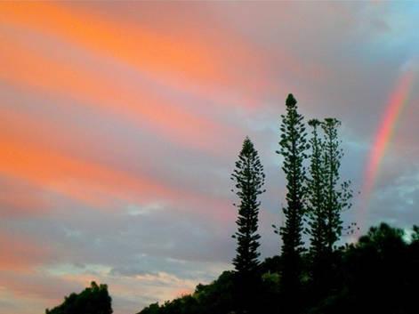 Pin colonaires au levé du soleil