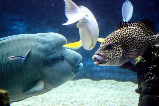 Aquarium des lagons.