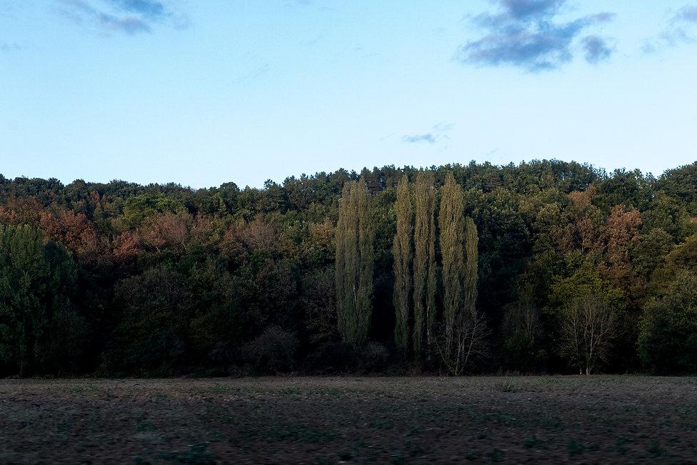 Tirage photographique - Sud-Ouest - Paysage - champs et foret - Derniers rayons de soleil - Maud Dupuy