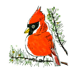Winter Cardinal | Sarah Wildfang