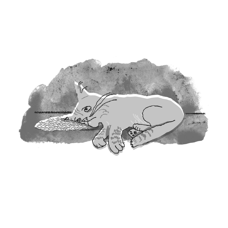 Sick Cat | Sarah Wildfang