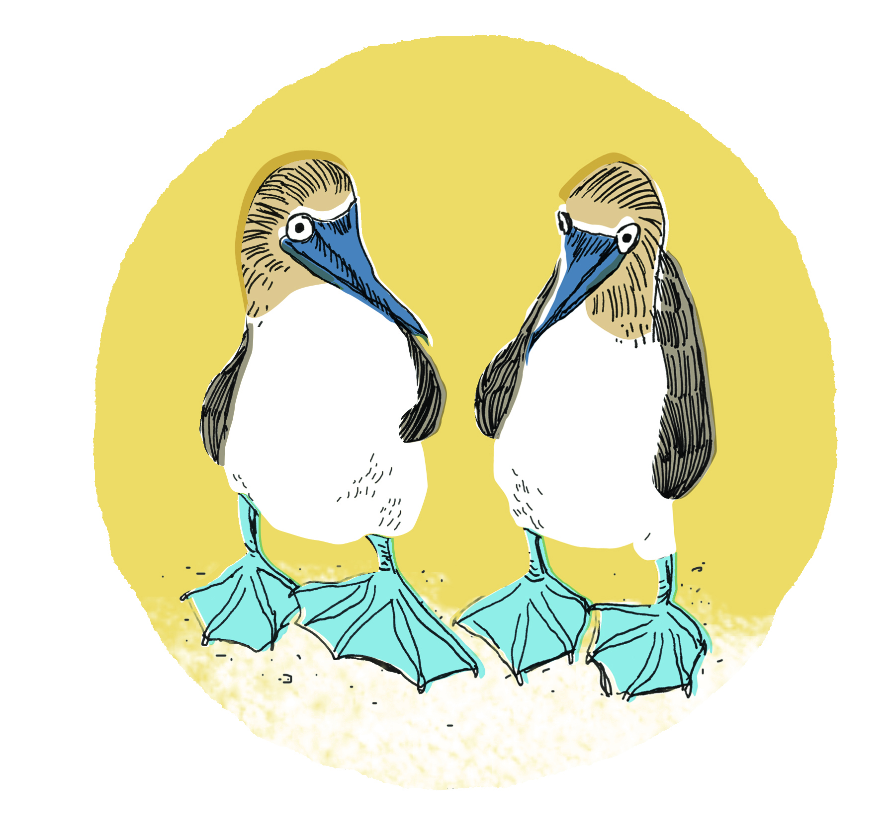 Blue Boobies | Sarah Wildfang