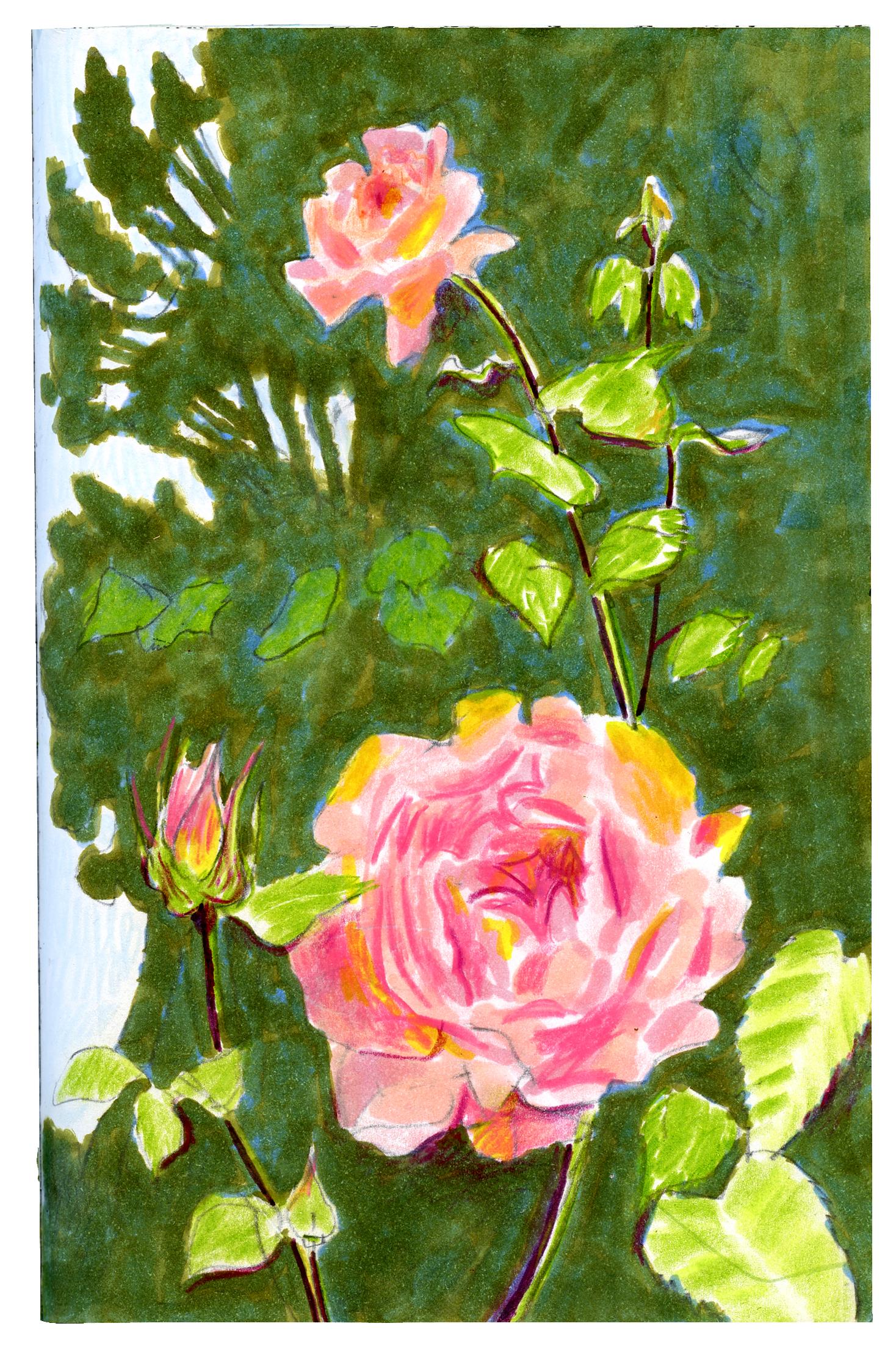 Garden Roses | Sarah Wildfang