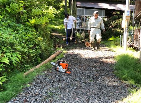 穴窯窯場の整備