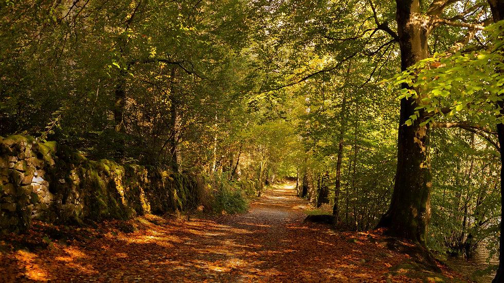 The Autumn Tale