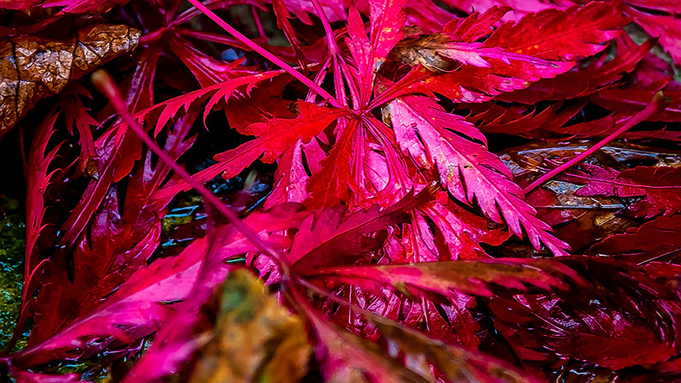 Vibrant reds of Autumn