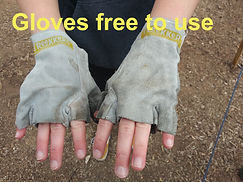 Free sterilized gloves top .jpg