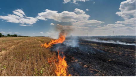 Stubble Burning causing the death of our air