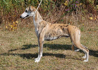 Chilly-Dog - 9.5 months Left Side - 0455
