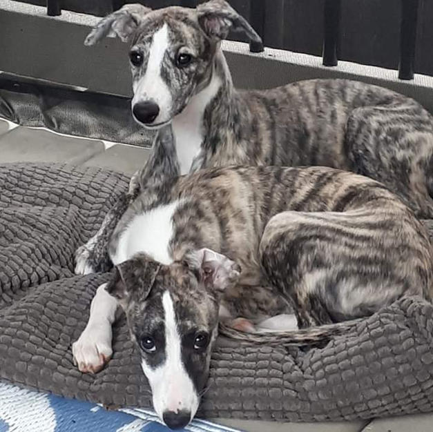 Lucy and Genie at 3 months old