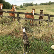 Ember and Foals.jpg