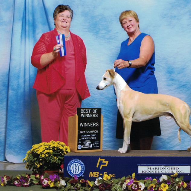 AKC-CH Photo - July 2018_100dpi.jpg