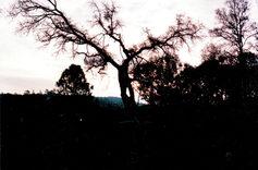 Tree1.jpg