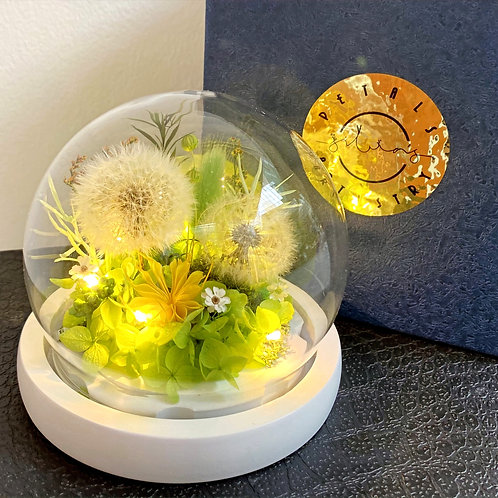 Preserved Floral Small Globe - Green Dandelions