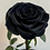 Thumbnail: Preserved Floral Dome - Black Single Rose