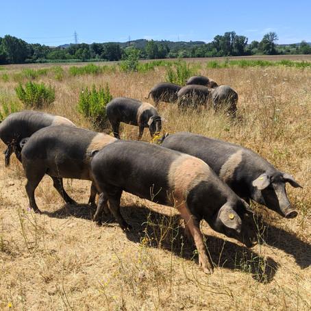 Organic Farm Tour & Lunch