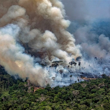The Amazon Wildfire Crisis