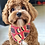 Thumbnail: Pablo and Co Dog Bandana - Vegemite, Small