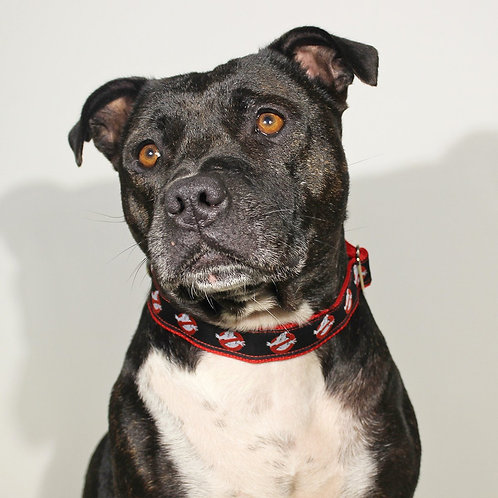 Ghostbusters - Collar and Leash Combo