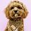 Thumbnail: Pablo and Co Dog Bandana - Leopard, Size Medium