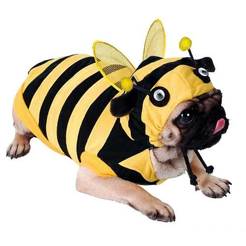 Bumble-Bee Dog Costume