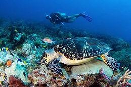 Jose Scaglia and the sea turtle
