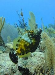 Ocean dives, scuba diving, diving Playa del Carmen