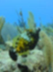 Precios buceos y cursos | Scuba Planet Mexico | Oxymonacanthus longirostris