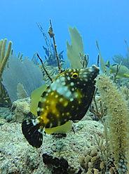 Prezzi immersioni e corsi | Scuba Planet Mexico | Pesce lima