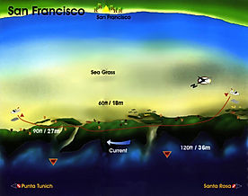 San Francisco map Cozumel