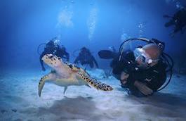 Andrea Carletti and the sea turtle