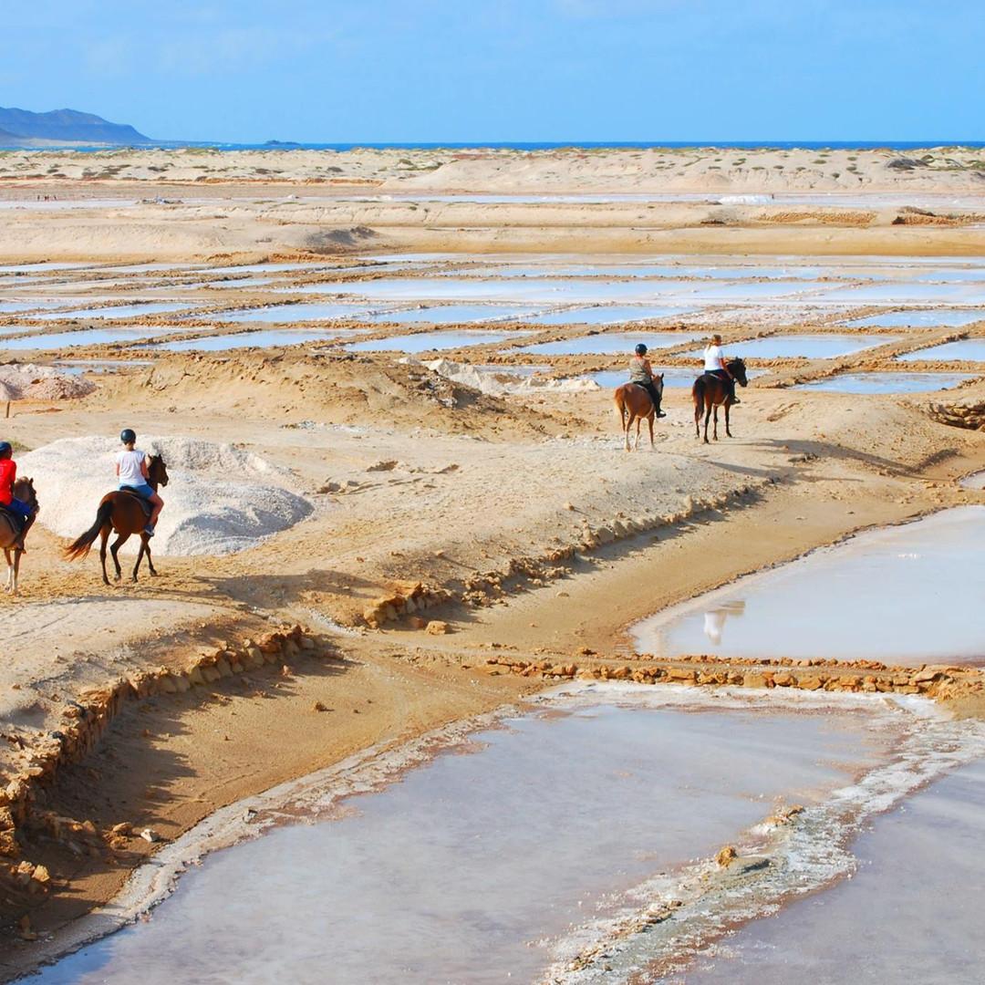 horse riding cabo verde sal island santa maria