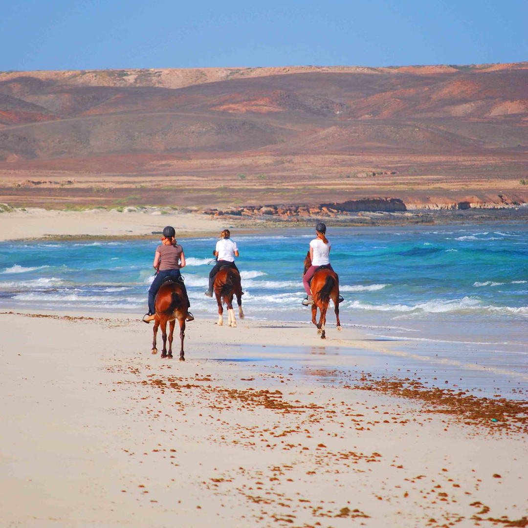 horse riding cape verde sal island santamaria