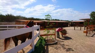 Horse Riding in Cape Verde Sal Island