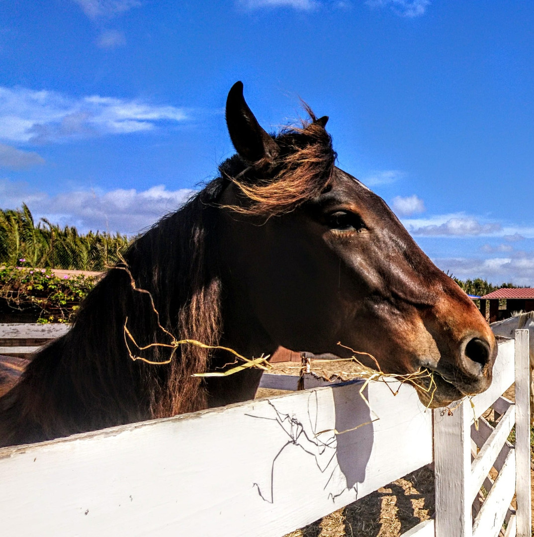 Hors riding in cape verde sal island