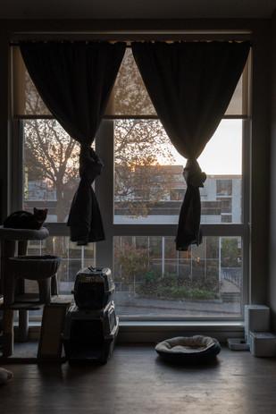 Window_5.jpg