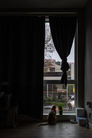 Window_14.jpg