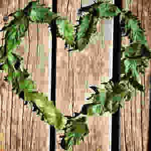 heart-shaped tomato leaves