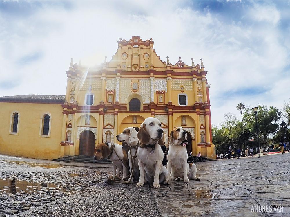 Perros en la ciudad