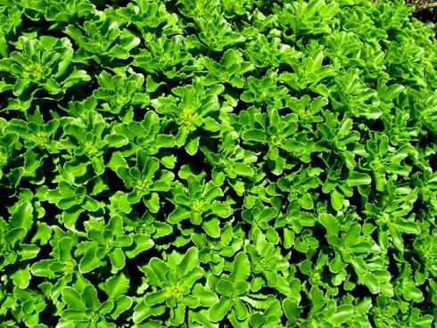 WWF green.jpg