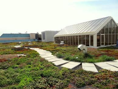 wwf-green-roof2.jpg