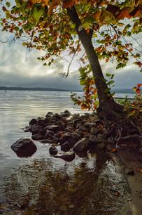 Lake Lemon Sunrise Tree