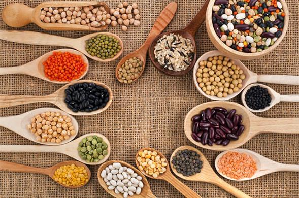 à la découverte des protéines végétales