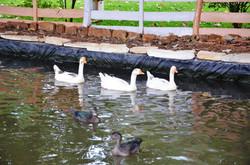 Lago das aves