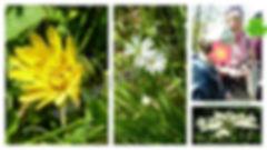 sorties botanique.jpg