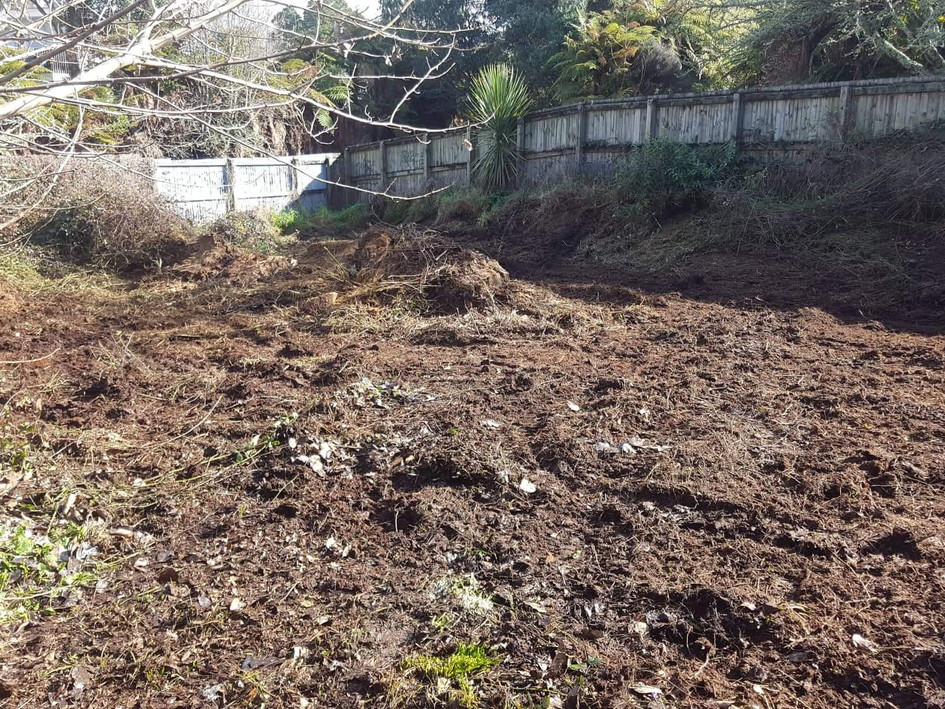 Overgrown section/blackberry mulching after